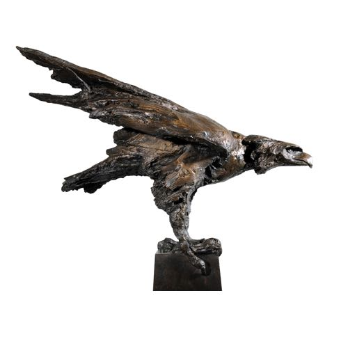 Raptor a bronze by Kate Denton
