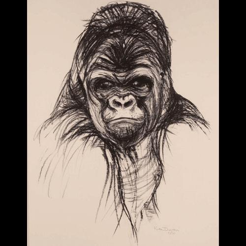 Gorilla drawing by Kate Denton