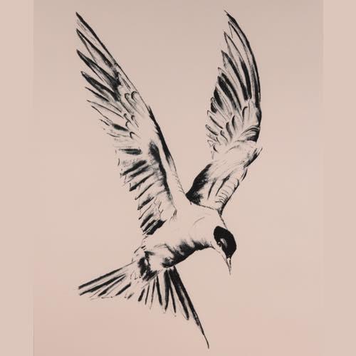 Tern drawing by Kate Denton