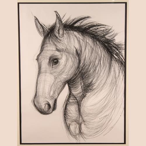 Horse's Head a drawing by Kate Denton