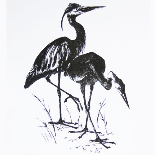 Herons a drawing by Kate Denton